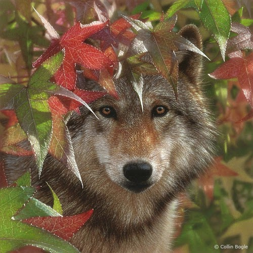14-Wolf-Autumn-Encounter-Collin-Bogle-Animal-Wildlife-in-Art-www-designstack-co