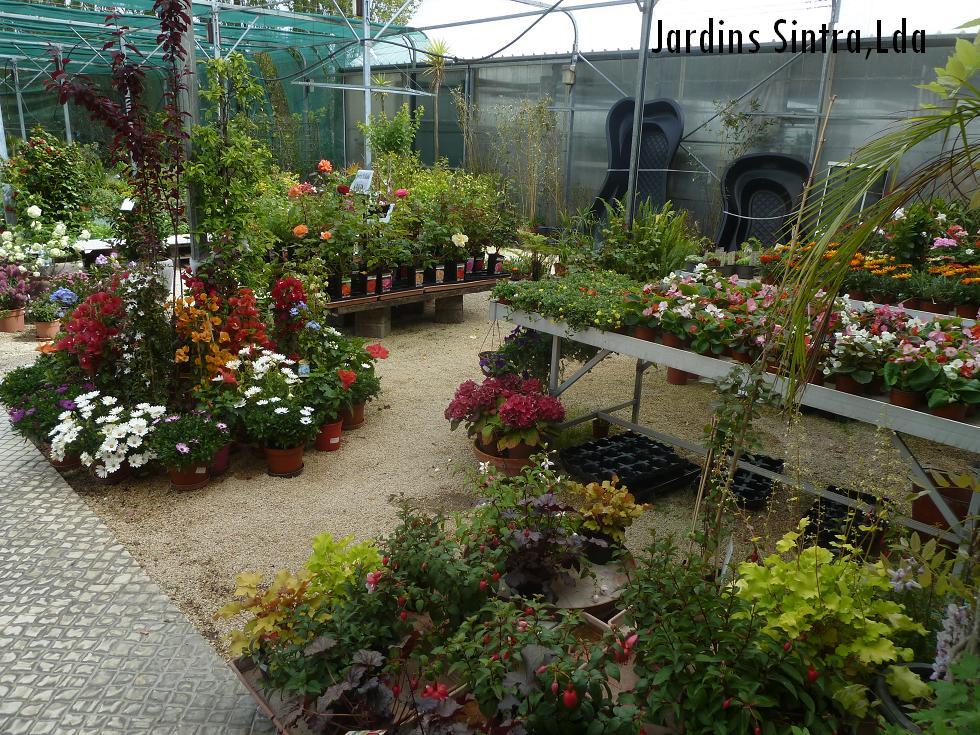 Jardins sintra jardins sintra centro de jardinagem for Jardin a sintra hermes