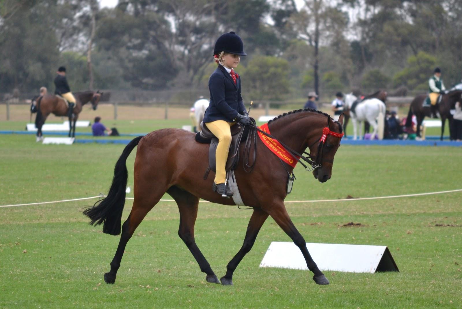 Kk Equestrian Barastoc Horse Of The Year Show Victoria