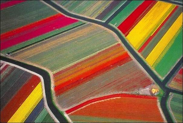 مزارع الزهور image024-773446.jpg