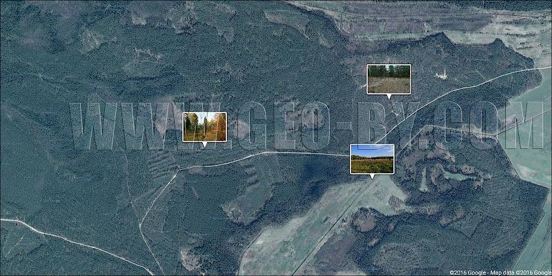 Спутниковая карта Налибокской пущи у деревень Заборье и Петриловичи