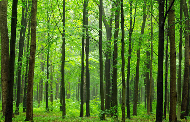 Climate stabilization: Planting trees cannot replace cutting CO2 emissions