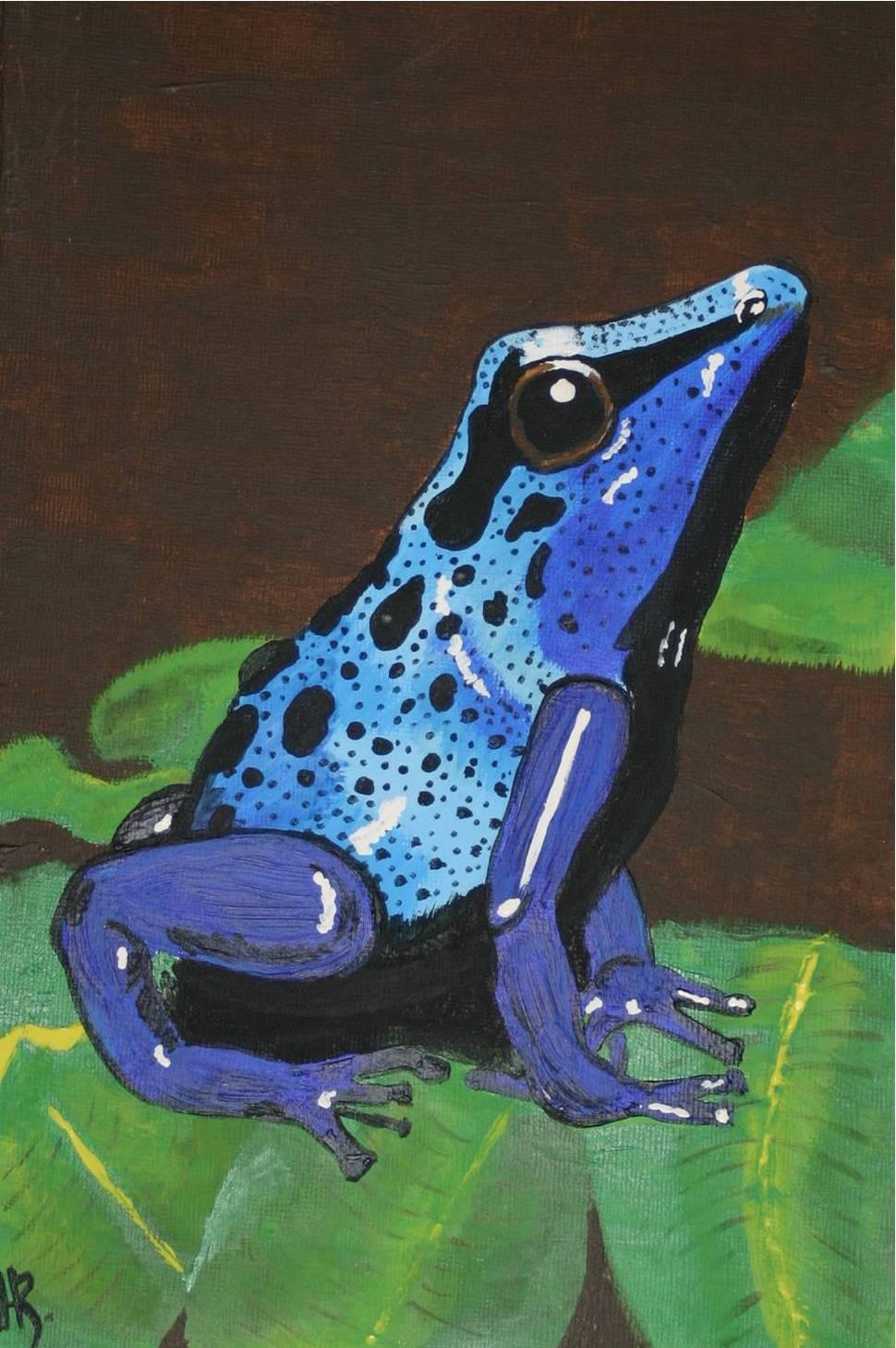 Wallpaper Sea: poison dart frog background