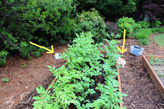 install a simple drip irrigation system, drip irrigation kit, backyard veggie garden, raised beds, diydesignfanatic.com