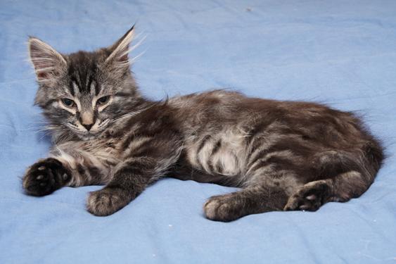 Kissan lisääntymistoiminnot