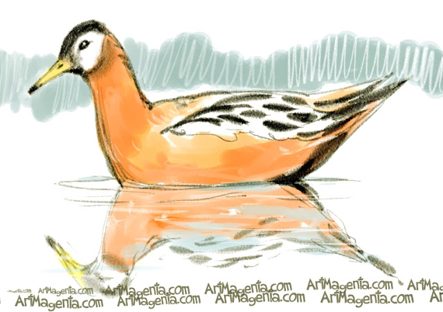 Phalarope sketch painting. Bird art drawing by illustrator Artmagenta.