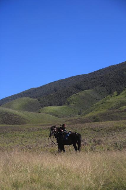 horses indonesia