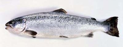 saumon_pour_perte_poids