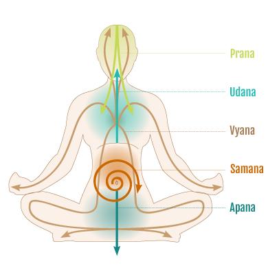prana-vayus-image