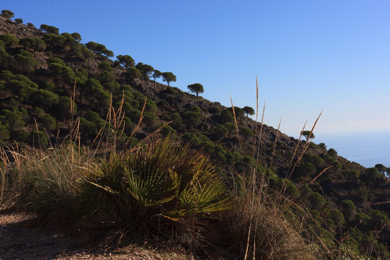mindfulness hiking