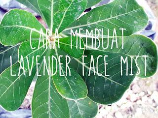 Cara-Membuat-Face-Mist-Lavender