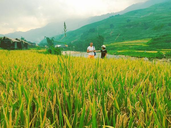 2 cung đường ấm áp mùa lúa vàng khiến nao lòng du khách - 145247