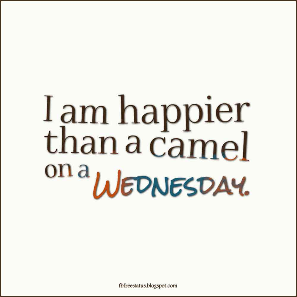 I am happier than a camel on a Wednesday.