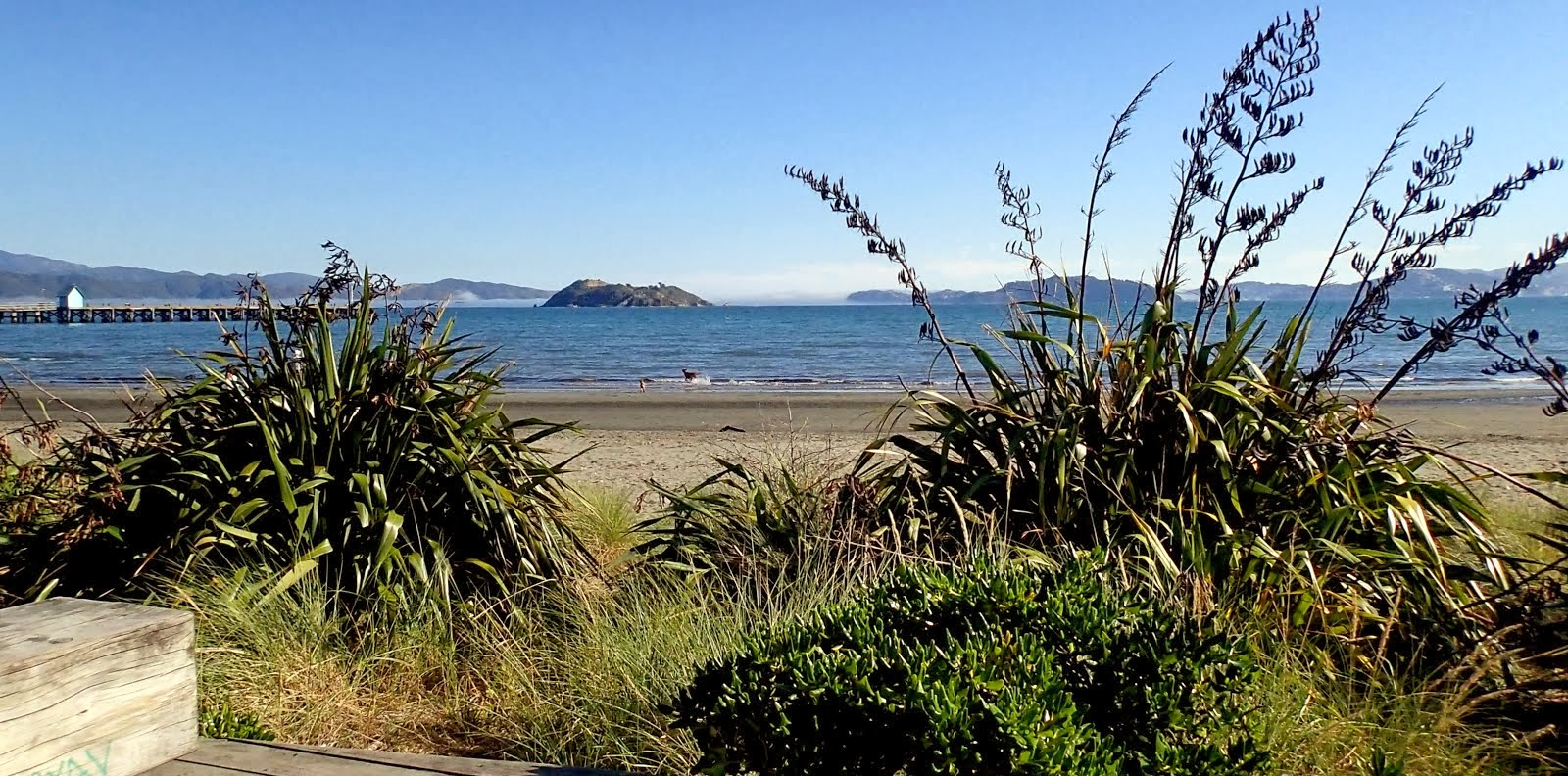 This evening on Petone Beach