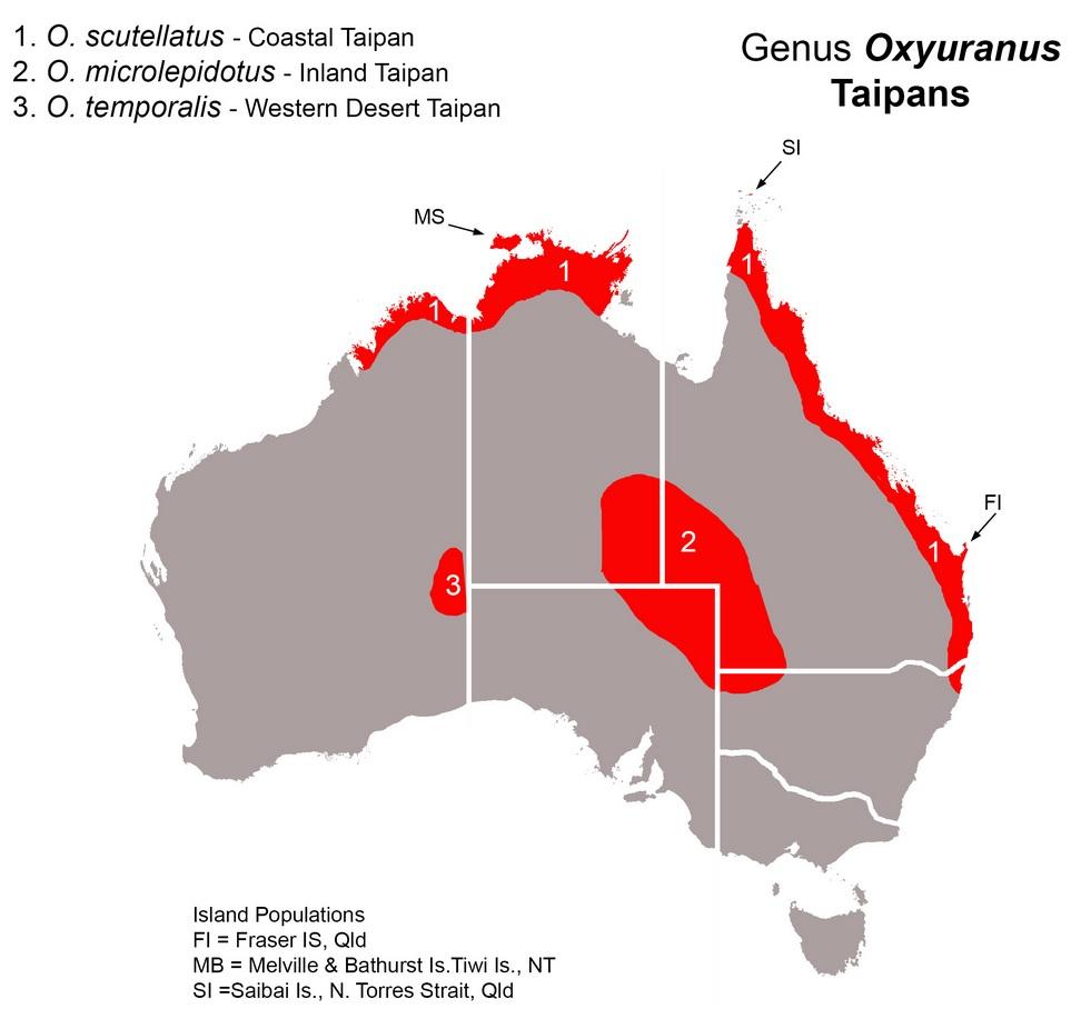 Map Of Australia Dangerous Animals.Top 5 Venomous Snakes In Australia Australian Dog Lover