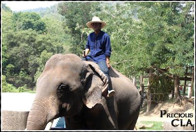 Mae Taeng Elephant Park , Chiang Mai Thailand