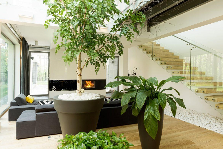 7 Μεγάλα Φυτά Εσωτερικού Χώρου που αξίζουν μια θέση στο σπίτι σου!