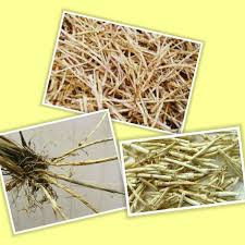 This is a nutritious Reed Rhizome