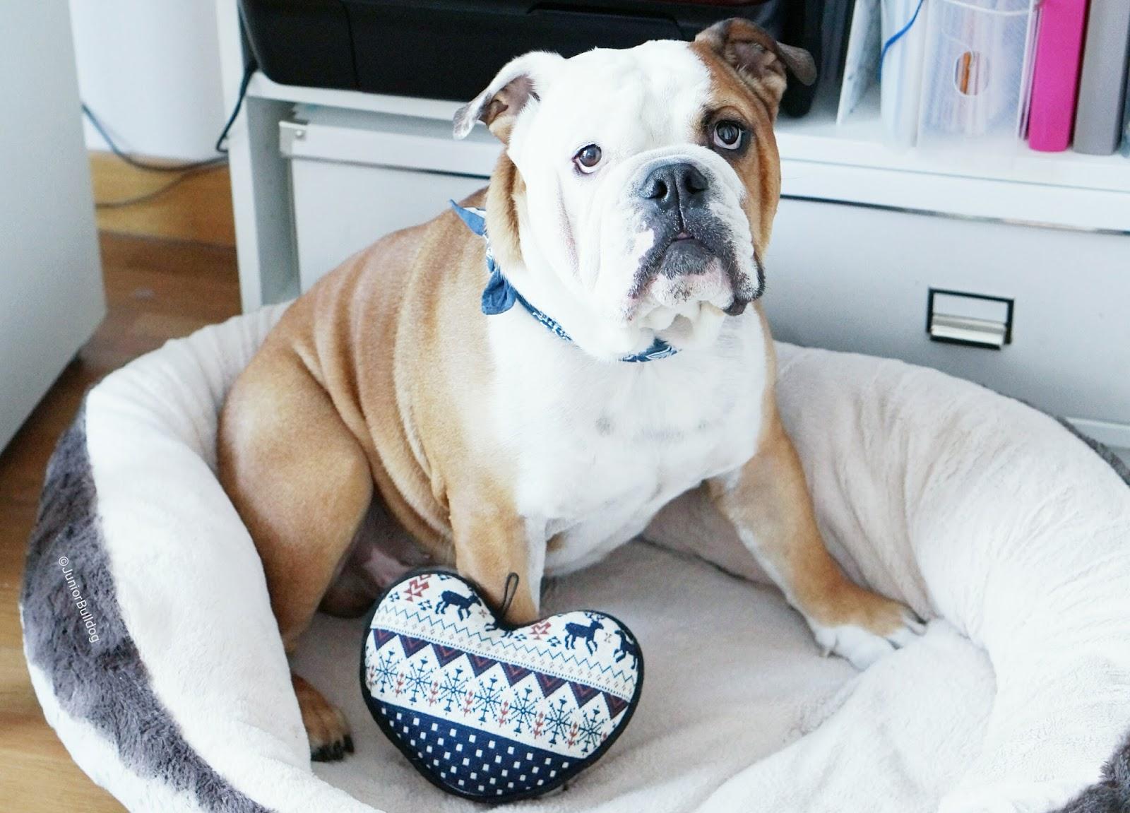 Woufbox box chien animalbox petbox bulldog anglais