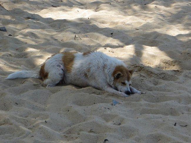 собака спит на пляже на море