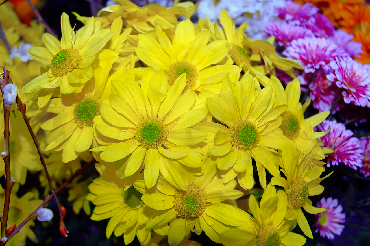 flowers for flower lovers.: Yellow flowers wallpapers.
