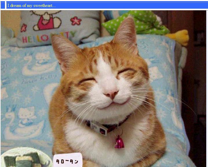 Pinterest Hilarious: Pinterest Images: Random Funny Animals