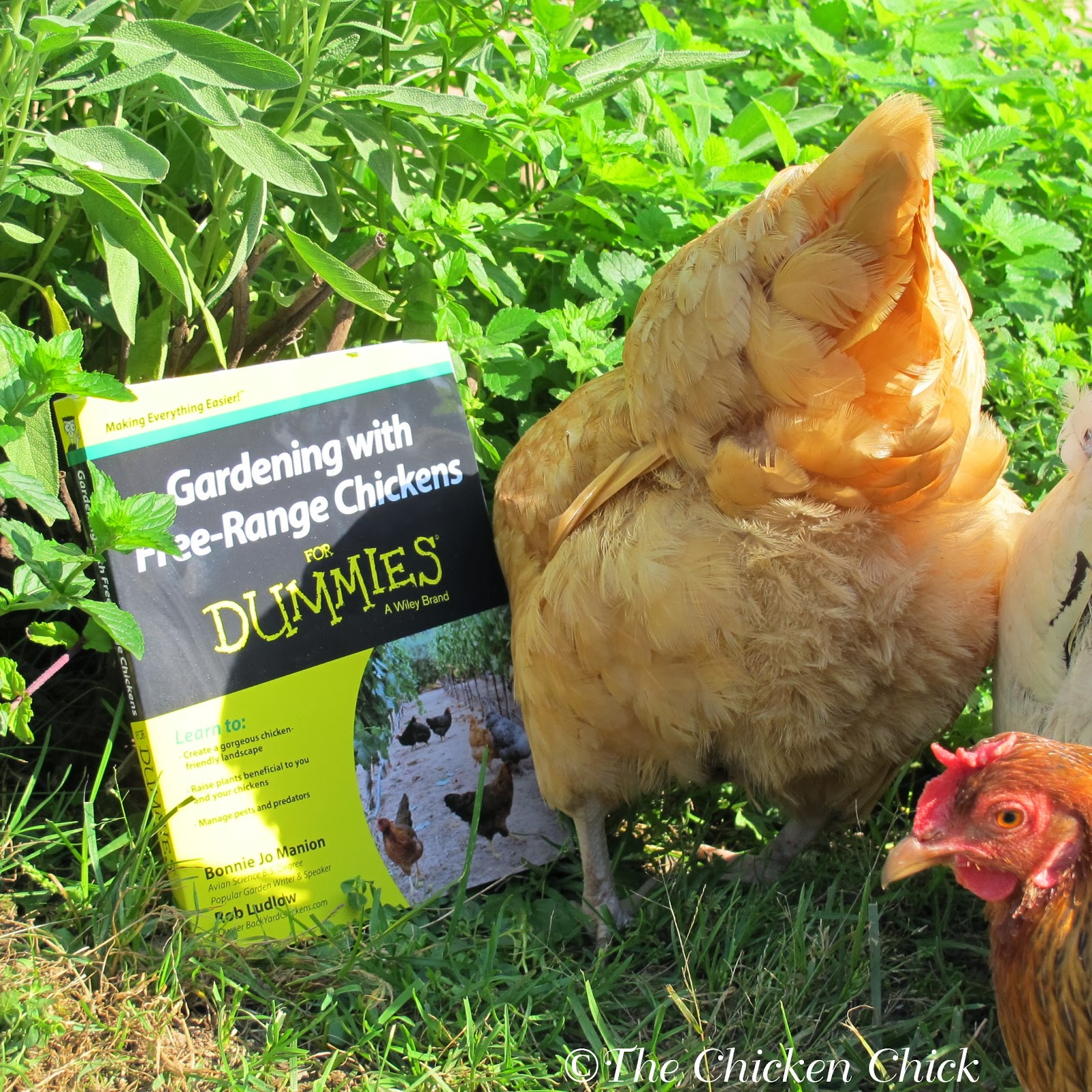 the best Gardening with Chickens books