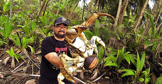 Monstro gigante: Autraliano corajoso se arrisca com caranguejo dos coqueiros