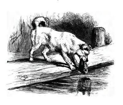 Dog and his shadow image