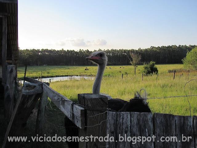 Recanto do Avestruz, Estrela, RS