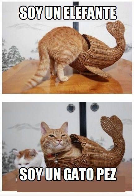 gatos divertidos