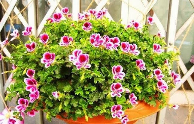 Las plantas en espacios peque os for Flores de jardin exterior