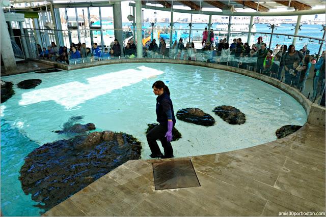 New Balance Foundation Marine Mammal Center en el Acuario de Boston