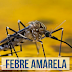 Vale do Ribeira tenta evitar disseminação da febre amarela