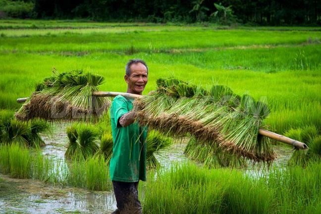 19+ Hasil pertanian terbesar di negara thailand adalah ideas in 2021