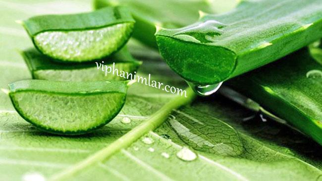 Aloe vera - www.viphanimlar.com