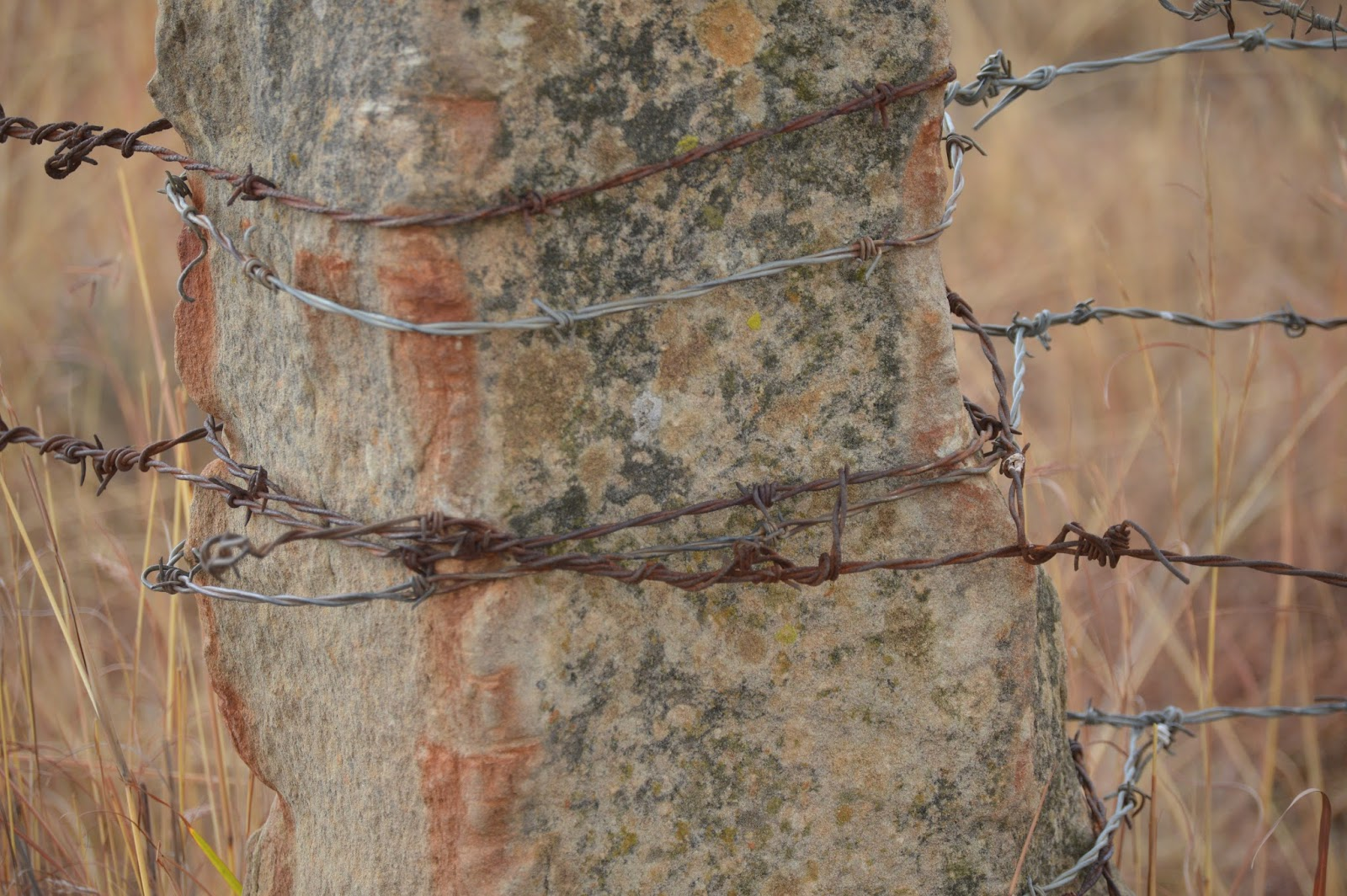 De Oude Huize Yard: Barbed Wire