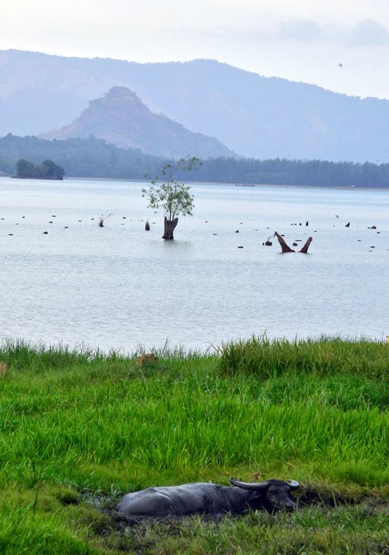 Animals at Mapanuepe Lake