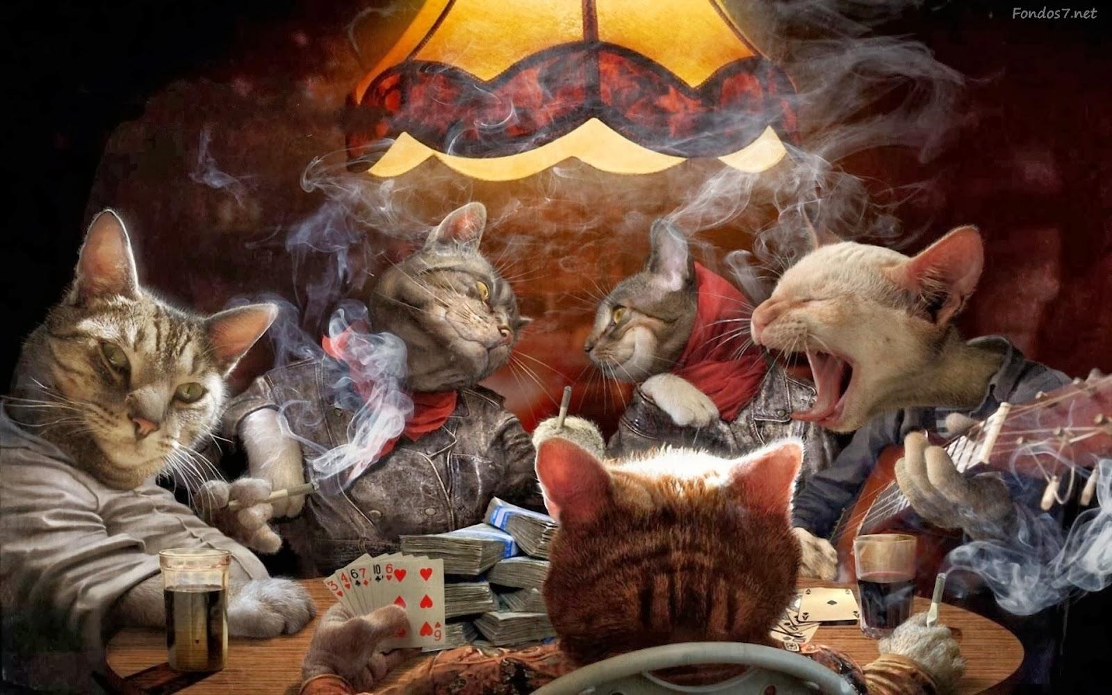 Día internacional del gato, Almas gemelas, Francisco Acuyo, Ancile