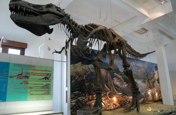 Koleksi Museum Geologi Bandung, Fosil Tyrannosaurus rex