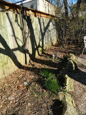 Parkdale Spring Garden Cleanup Before by Paul Jung Gardening Services a Toronto Gardening Company