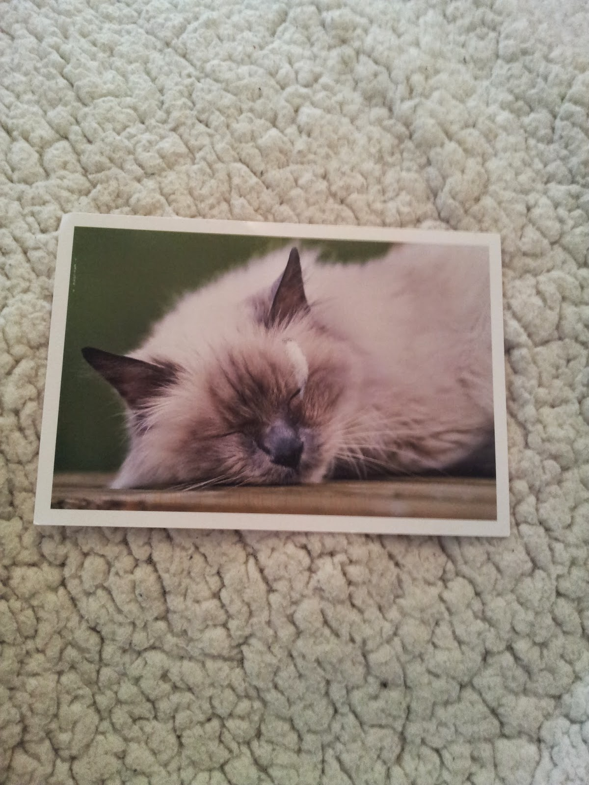 carte-postale-postcrossing-cartes-chat