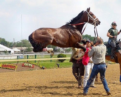 amazing horse racing photos