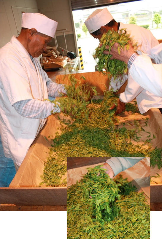 The Rare Hand Rolled Japanese Green Tea Temomi Shincha