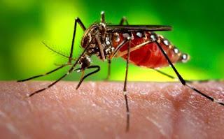 Surto de dengue ameaça seis regiões do Distrito Federal