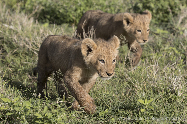 Our African Safari - Day Three (Lion cubs, Zebras, Elephants and more ...