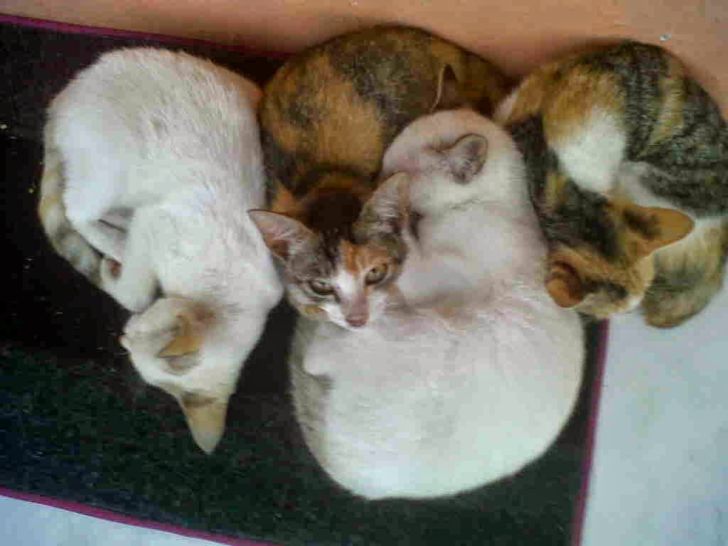 Cats Generation Nuril Erlinda