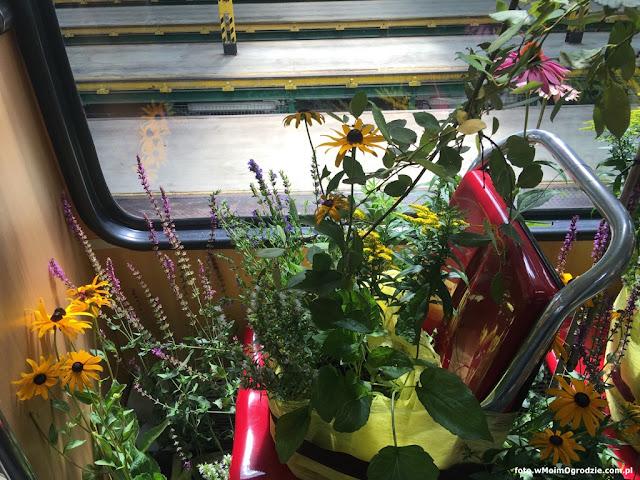 rosliny kwiaty dekoracje