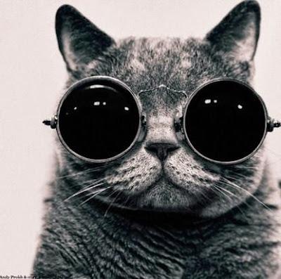 gato con lentes gigantes