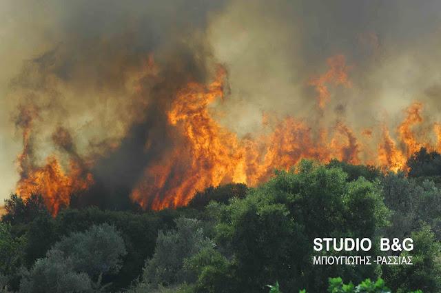 57 δασικές πυρκαγιές το τελευταίο 24ωρο εκδηλώθηκαν σε όλη την Ελλάδα